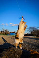Cat on Stage! (Tom-R) Tags: cats cat nikondf
