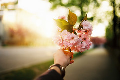 spring on the most beautiful street in nitra (janamartish) Tags: street morning light sun sunlight flower detail film analog 35mm canon cherry golden spring hand blossom kodak bokeh sakura 100 frana ektar nitra 1000n mojtu