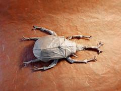 Samura helmet beetle mai 2016 - 2 (Rmygamiste) Tags: paper insect origami beetle fold samura