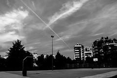 255/365 Siesta (darioseventy) Tags: park city trees sky urban bw parco alberi clouds buildings lunch wake nuvole break basket bn cielo siesta bianconero edifici pranzo pausa blackanwhite pallacanestro scia lovethisgame
