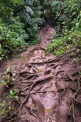 Kauai_2016-30-Edit.jpg (rennisk0322) Tags: landscape hike princeville queensbath muddytrail