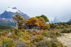 IMGP0581.jpg (gnosmos) Tags: herbst el gletscher chalten argentinien patagonien sigmaobjektiv