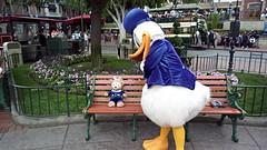 Donald Looking at Duffy (BeautifulToyReviews) Tags: bear street outside outdoors duck anniversary disneyland character main parks disney donald diamond celebration duffy edition meet 60th greet