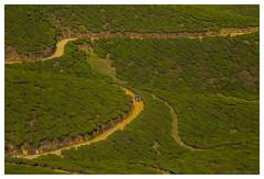Go Green (www.amudhahariharan.com) Tags: green nature landscape estate tea curves munnar highest kolukkumalai moonar theni amudhahariharan