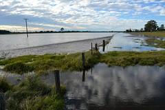 Boggy Creek bottoms (dustaway) Tags: flooding australia nsw waterscape fenceline boggycreek floodwater northernrivers richmondvalley richmondriverfloodplains bungawalbincatchment
