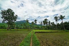 Probolinggo life (kevinwenning) Tags: mountain indonesia java village culture jungle palmtree ricefield banyuwangi wenning probolinggo kevinwenning intentionallylostcom