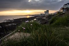 westward ho! morning (jon.capps) Tags: ocean uk longexposure flowers sea summer cloud seaweed water sunrise canon rocks heather tripod pebbles hdr shutterrelease manfrotto britan clifftop westwardho 1740mmf4 60d nd03 northdevonbeaches canon1740mm14lusm