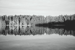 sound waves (red line highway) Tags: trees sunset shadow sky blackandwhite white lake black reflection tree nature monochrome clouds forest landscape spring nikon day waves russia sound minimalism simple frequency