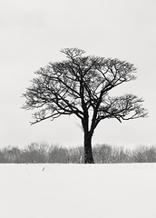 A Dream within a Dream (hiromichiendo) Tags: longexposure winter blackandwhite bw snow seascape abstract tree art nature monochrome japan landscape still hokkaido fineart silence zen nd minimalism tranquil