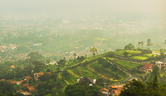Bandung (Geemage) Tags: city green landscape tiltshift