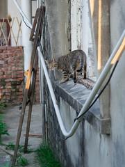 P4085750 (daisuke1230) Tags: cat olympus neko em  m43