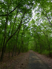 Museum Road (Dendroica cerulea) Tags: road trees forest newjersey spring path nj trail matawan cheesequakestatepark middlesexcounty