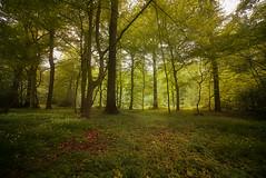 Spring is on its way (jan.arnds) Tags: wood brown green leave nature leaves forest landscape spring time outdoor change gras trunks treebole janarnds