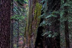 treelayers