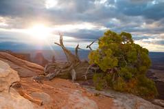 At dawns first light (itsthechaser) Tags: nature sunrise nikon canyonlandsnationalpark d300 nikond300