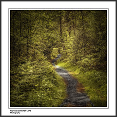 The Way Through the Wood (Chalky666) Tags: wood trees painterly tree leaves woodland landscape path surrey