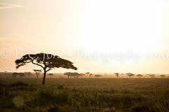 IMG_5241-2 (hcjonesphotography) Tags: africa park elephant black tree nature birds animal umbrella tanzania monkey cub rainbow buffalo jackal eagle crane outdoor lion tent lodge lizard ostrich safari ngorongoro national leopard crater rhino lions zebra cheetah giraffe hippo impala serengeti hyena maasai hornbill stork mongoose wildebeest warthog manyara tarangire dikdik tented