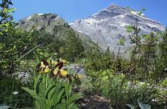 photo 2 (luka116) Tags: fleur montagne juin suisse paysage valais orchides 2016 cypripediumcalceolus derborence orchidaces