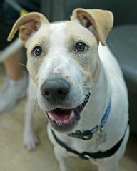 Expo_03 (AbbyB.) Tags: dog pet animal newjersey canine doggy shelter shelterpet petphotography easthanovernj mtpleasantanimalshelter