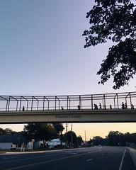Running the Echo Half Marathon across Volusia County #lovefl #sunrise #explore #igers_orlando #vscocam (ahh.photo) Tags: street morning bridge people silhouette sunrise florida marathon echo pedestrian running half volusia iphoneography instagramapp