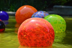 42. Smooth - 116 pictures in 2016 (Krasivaya Liza) Tags: atlanta chihuly glass ga garden georgia botanical photography photo nikon group smooth floating exhibit 42 challenge yearly 116picturesin2016 116pictures the116