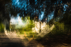 afternoon-149.jpg (Yvonne Rathbone) Tags: afternoon blur green icm movement shade sunlight trees uc berkeley blurry motion technical 1855mmf3556gvr cal ucberkeley campus street wideangle
