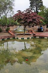 Urban Pond (skipmoore) Tags: park public water pond santarosa feature