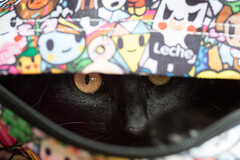 Helping (Pittypomm) Tags: black cat bag tiny backpack inside lottie