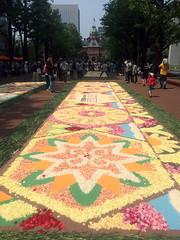 Sapporo Flower Carpet 2 (Sasakei) Tags: japan sapporo hokkaido iphone