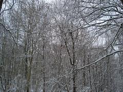 Savernack Forest Marlborough Uk (deniseclark4) Tags: trees white snow black cold forest