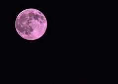 Strawberry Full Moon! (ineedathis,The older I get the more fun I have....) Tags: summer sky nature space satellite luna fullmoon craters moonrise astronomy strawberrymoon nikond750