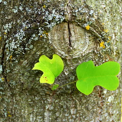 green (Stiller Beobachter) Tags: summer plant macro tree leaf blossom