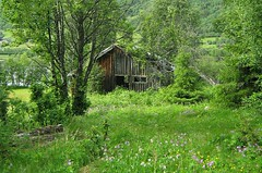 Dilapidated house (Multerland.........) Tags: trees fern nature water norway moss stream wildlife pines naturereserve wildflowers hallingdal buskerud hovsfjorden june2016
