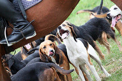 Jagd (CA_Rotwang) Tags: dogs germany deutschland boots riding reiter fox nrw tradition bochum rider ruhr ruhrgebiet equestrian hunde hunt jagd stiefel ruhrtal reitstiefel