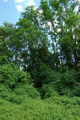 DSC_0046 (rlnv) Tags: newjersey princeton delawareandraritancanalstatepark 1855mmf3556gii nikond40x newjerseystateparks
