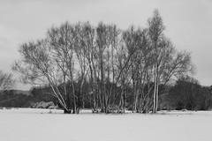 snow walk (RAY TYLER IMAGES) Tags: snow castle meadows abergavenny snowwalk