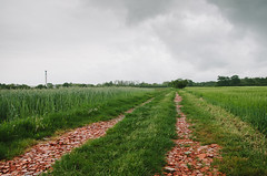 Red brick road (Theria) Tags: road rain clouds landscape path slovenia fields agriculture cloudysky prekmurje redbrickdebris