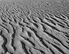 Sand Ridges (Randy Stankey) Tags: film 35mm blackwhite ilford panf diafine beach presqueisle lakeerie