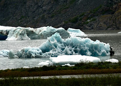 Blue Ice Flow Alaska Glacier (zenosaurus) Tags: cruise blue vacation mountain snow mountains ice alaska frozen eagle glaciers eagles