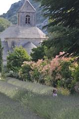 Abbazia tra i fiori (Mario Fornasari) Tags: turismo francia paesaggi provenza lavanda lagente