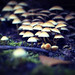 265 - Johan Sandberg McGuinne - Mushrooms on Dumyat