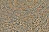 Nora - Pula (rupertalbe - rupertalbegraphic) Tags: sardegna sardinia mosaico pula terme romane rupertalbe albertomariani rupertalbegraphic