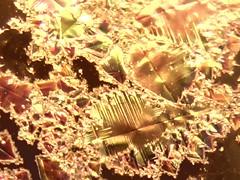 Detalhe capturado por microscpio, quando da observao de esmalte cermico com cristalizaes. (Beth Coe Maeda) Tags: texture glass brasil digital studio de shiny ceramics image potter glaze pottery material krystal kiln visual microscope cristal fogo artes brillante ceramique poterie experimentos tecnologia qumica primas atelier magia argila pesquisa colorido crystalline contemporneo craftwork micrograph clayart alquimia cincia glanzend inspirao cristais crescimento cientfico micrography desenvolvimento vidrado brilhante lcido ceramista microstructure matrias minerais investigao cristalline microscopia xidos keramiker crystaux crystallography kristallin cristallin cristalografia pottemager skinnende vtreo cristalizao krukmakare krystalicky krystallisk kristalliline kristalyos vitrificao nucleao