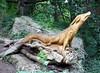 Tree Carvings - Knaresborough (Nigel_Brown) Tags: uk greatbritain england lumix dragon unitedkingdom yorkshire tommy panasonic gb knaresborough stockphoto craggs 2013 treecarvings nigelbrown dmctz8 tz8