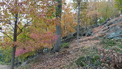 P1080805 (A Million Shards of Light) Tags: autumn dogs halloween fog river foliage hudson rockefeller rockwood