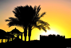 Sharm El Sheikh, Egypt Sunset (Emz.watson) Tags: africa sunset vacation sky orange sun holiday black hot water pool beautiful silhouette yellow skyline night contrast sunrise buildings landscape hotel scenery asia warm colours theatre gorgeous country egypt sharmelsheikh award international palmtree abroad animation colourful emilywatson sealiferesort nikond3100 vision:sunset=0681 vision:mountain=0502 vision:sky=0968 vision:clouds=0599 vision:outdoor=0567