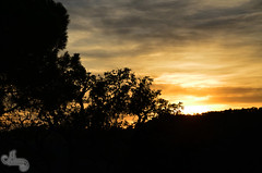 Puesta de sol en la Costa Brava 03 (Uruvyel) Tags: trees sunset costa sun sol leaves silhouette clouds hojas photography mar photo leaf nikon foto arboles catalonia nubes rbol puestadesol nl silueta puesta len sant brava catalua tossa fotografa feliu guixols noem d7000 nlfotografa