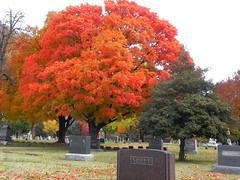 11_02_13_ Fall Colors in Hazelwood Cemetery (Rottlady) Tags: trees cemetery fallcolors headstone autumncolors springfieldmissouri gravemarker colorfulleaves theozarks rottlady hazelwoodcemetery