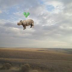 her own private idaho (Janine Graf) Tags: travel silly balloons whimsy surrealism surreal idaho rhino prairie whiterhinoceros janine1968 iphone4s janinegraf