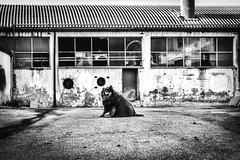 Bob One (Alessandro*Passerini) Tags: city blackandwhite dog architecture abruzzo